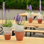 Začinsko bilje nana lavanda bosiljak i ruzmarin u saksiji