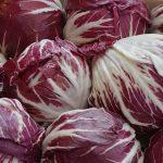 Crveni radič salata uzgoj i priprema