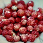 Šumske jagode – kako se pravi slatko od šumskih jagoda recept