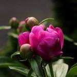 Baštensko cveće koje cveta cele godine