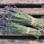 Saveti za uzgoj lavande i isplativost gajenja