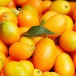 Kumkvat voće sadnice uzgoj cena