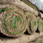 Tepih trava u rolnama cena po kvadratu