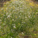 Sredstvo protiv korova i trave – herbicidi za uništavanje korova na prirodan način