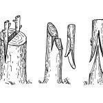 Kalemljenje voća – vreme kada se kalemi, tehnike, postupak, alat