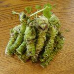 Wasabi biljka uzgoj – sos pasta recepti gde kupiti i cena