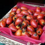 Tamarilo voće uzgoj gde kupiti i cena