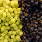 Najbolje stone sorte grožđa za jelo u svežem stanju