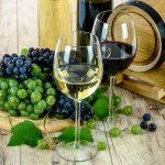 Bistrenje vina belancetom mlekom želatinom bentonitom