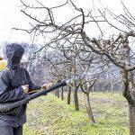 Jesenje plavo prskanje voća – značaj, vreme izvođenja, preparati
