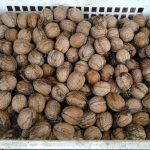 Kako se čuvaju orasi – skladištenje oraha