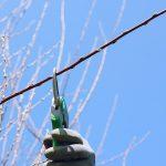 Zimska rezidba voćaka za početnike, vreme izvođenja i saveti