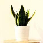 Sobne biljke koje čiste vazduh u domu – obradujte svoja pluća